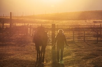 Cowgirl walking horse at sunrise.